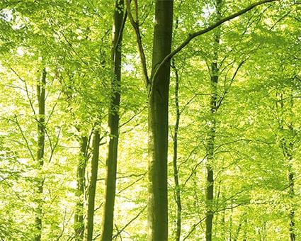 t-360-haba-spielzeug-kullerbue-nachhaltiger-forstwirtschaft-in-deutschen-waeldern-verwenden.jpg