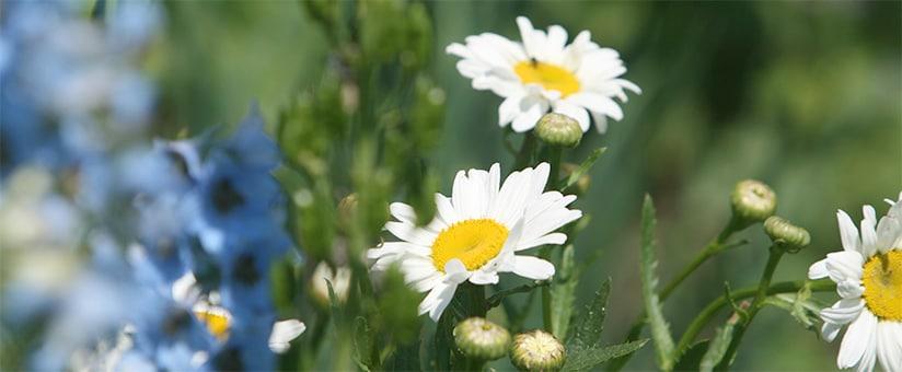 t-824-haba-spielzeug-wildblumen-ansaehen-und-dieses-dann-den-ganzen-sommer-stehen-lassen.jpg